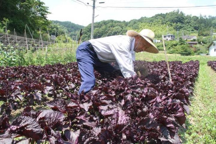 画像引用元:茨木市ホームページ「いばらき便り」より